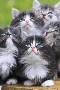 Cats looking up