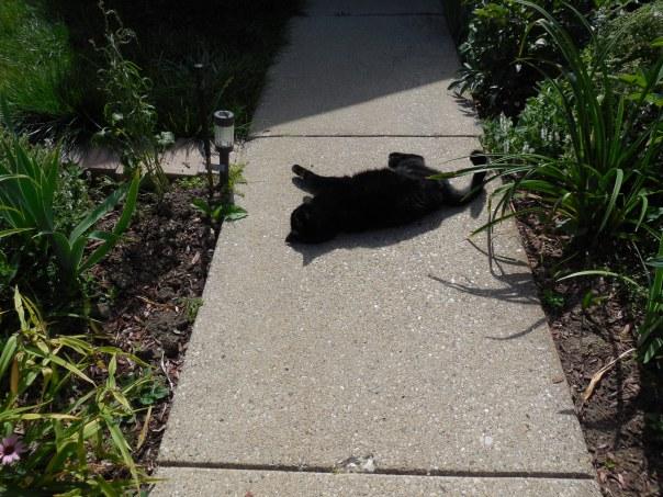 Dee Dee My Cat