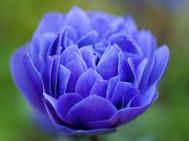 layersflower45