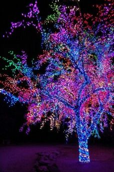 lights4